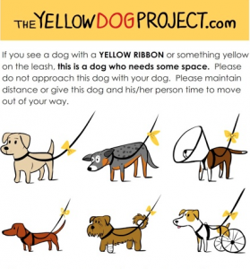Yellow Dog Project